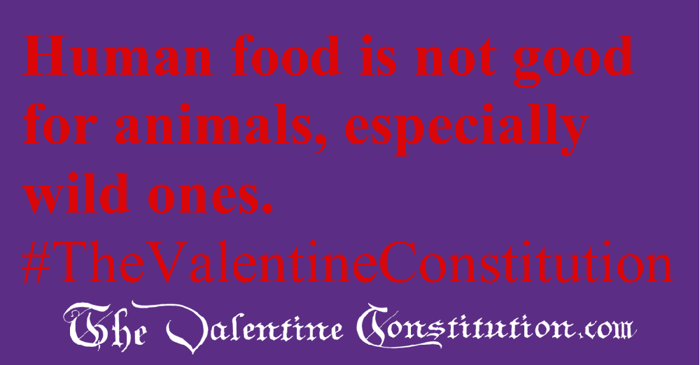ENVIRONMENT > ANIMAL RIGHTS > No Feeding Wild Animals